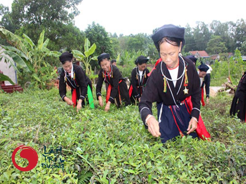 Thuốc nam Lâm Trí Đường có nguồn gốc 100% từ thiên nhiên